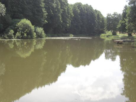 Dorfweiher Unterbreitenlohe 1